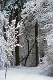 Winter nature. the first snow in the forest Royalty Free Stock Images