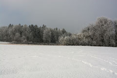 Winter nature. Winter nature forest field snow trees frost Royalty Free Stock Images