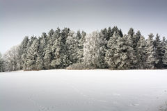 Winter nature. Winter nature forest field snow trees frost Stock Photography