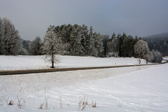 Winter nature. Winter nature forest field snow trees frost Stock Image