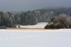 Winter nature. Winter nature forest field snow trees frost Royalty Free Stock Image