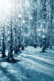 Winter nature, forest in a snow stock photos