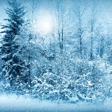 Winter nature, forest Royalty Free Stock Image