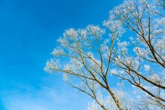 Winter nature on a frosty Sunny day. Frozen tree. Background royalty free stock photography