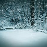 Winter nature, night magic  forest Royalty Free Stock Photography