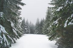 Winter nature in the Giant Mountains stock image