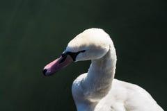 Winter nature.Lake. Birds. Royalty Free Stock Photos