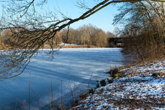 Winter nature.Lake. Winter nature  trees frost city ecologylake water trees Royalty Free Stock Photos