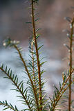 Winter nature.Lake. Winter nature  trees frost city ecologylake water trees Royalty Free Stock Photo