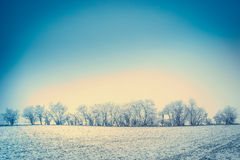 Winter nature landscape background with snow, field and trees covered with hoar frost and blue sky Royalty Free Stock Images