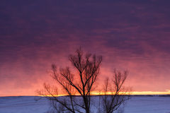 Winter nature landscape. Silhouette of tree at sunset Royalty Free Stock Images