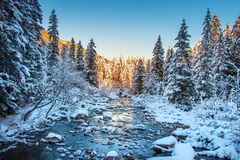 Winter nature landscape. Snowy fir trees in clear morning. Christmas holiday background. Snowy forest and mountain river. Frosty nature royalty free stock images