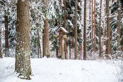 Winter nature in Lithuania stock photo