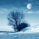 Winter nature, moon and tree stock image