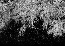 Winter nature, night snowy forest Stock Image