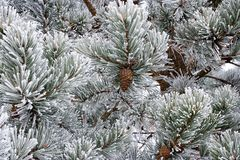 Winter nature ornaments Stock Images
