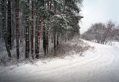 Winter nature, road in forest Stock Photo