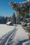 Winter nature scene with people Stock Photography