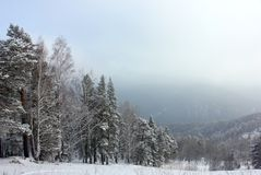Winter nature Siberian taiga Royalty Free Stock Image