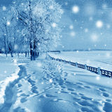 Winter nature, snow fall Royalty Free Stock Images