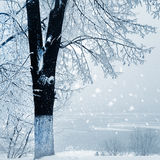 Winter nature, snow fall Royalty Free Stock Photo