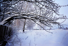 Winter nature in a snow Stock Photos