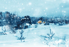 Winter nature in a snow stock photography