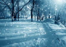 Winter nature in a snow Royalty Free Stock Image