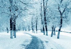 Winter nature, snowstorm Royalty Free Stock Photos