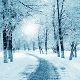 Winter nature, snowstorm Royalty Free Stock Photo