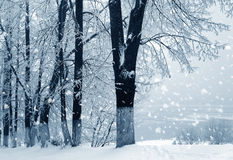 Winter nature, snowstorm in city Stock Image