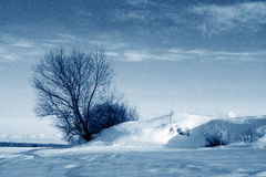 Winter nature, snowstorm Royalty Free Stock Images