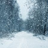 Winter nature, snowstorm in forest Royalty Free Stock Photography