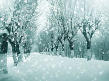 Winter nature, snowy trees in park Stock Images
