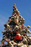 Winter landscape, snowy christmas tree royalty free stock photo