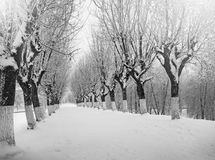 Winter nature, snowy trees in park. Winter nature, snow and snowy trees  in park Stock Images