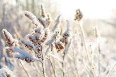 Winter nature on a Sunny day. Branches in snow on blue sky background in winter stock images