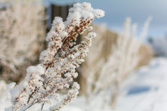 Winter nature on a Sunny day. Branches in snow on blue sky background in winter stock photography