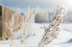 Winter nature on a Sunny day. Branches in snow on blue sky background in winter stock photo