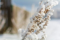 Winter nature on a Sunny day. Branches in snow on blue sky background in winter royalty free stock photos