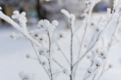 Winter nature on a Sunny day. Branches in snow on blue sky background in winter royalty free stock image