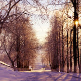 Winter nature, sunset Stock Images