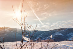 Winter nature at sunset Royalty Free Stock Photos