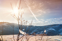 Winter nature at sunset Royalty Free Stock Image