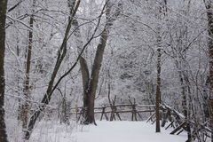 Winter in the nature trail. Stock Photo