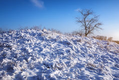 Winter nature with tree and snow-covered plants on the hill Stock Photo