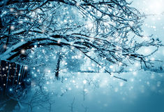 Winter nature, tree in a snow stock photo