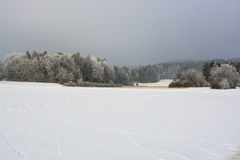 Winter nature. Royalty Free Stock Photography