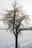 Winter nature. Stock Photos