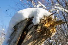 Winter nature under the first snow on a sunny day. Stock Photo